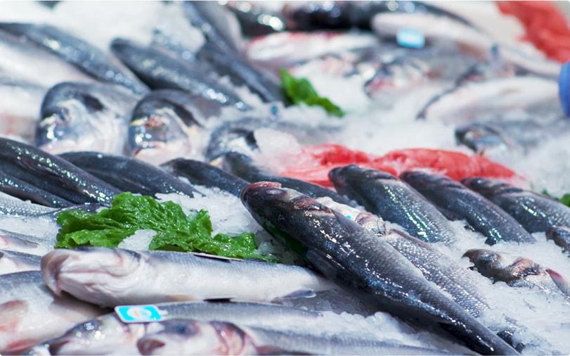 Peixe aquacultura