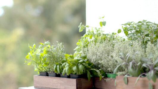 Benefícios ervas aromáticas