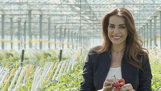 Produção de tomate em Portugal